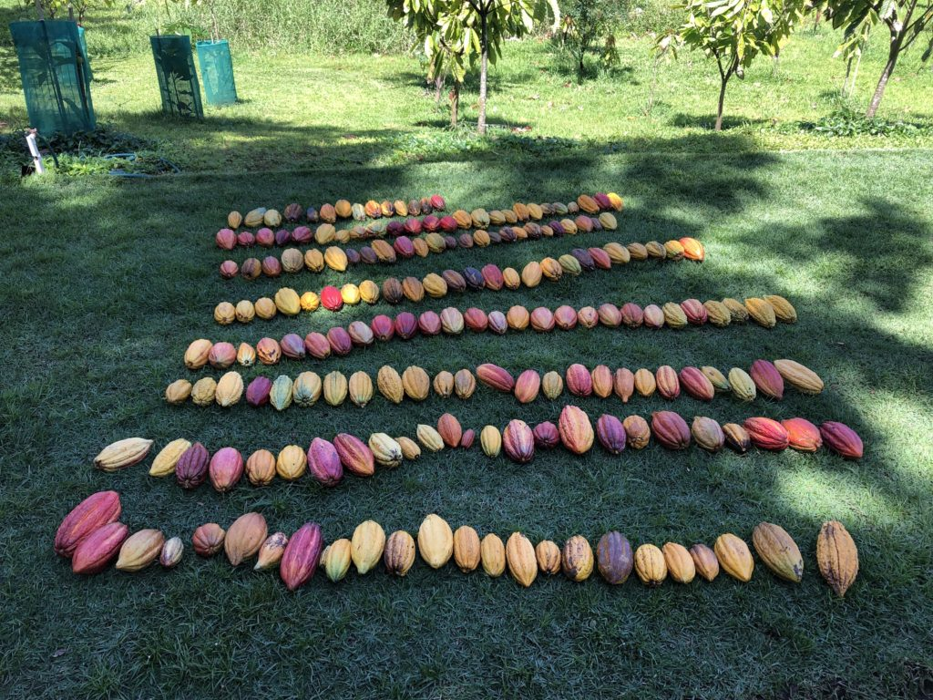 2.24.19 21d harvest pods laid out